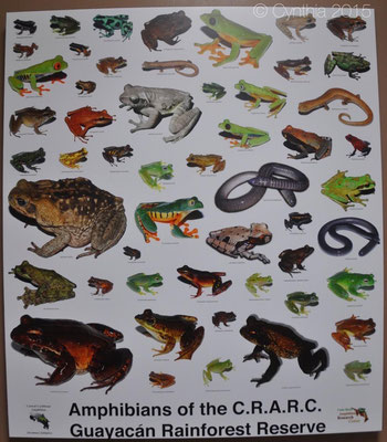 All amphibian species that live inside the CRARC reserve