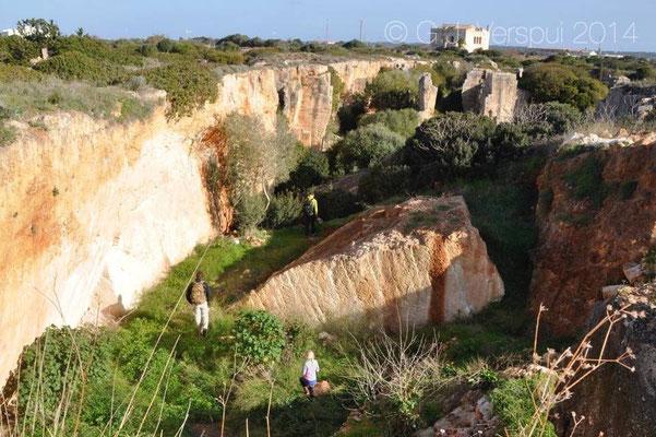 Habitat of Moroccan Rock Lizard - Scelarcis perspicillata
