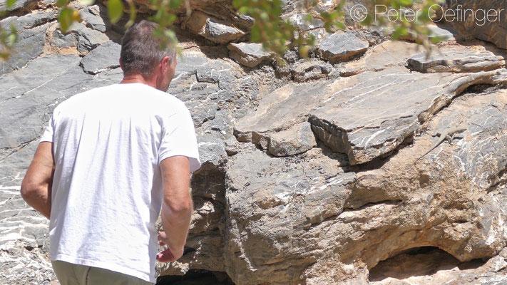 Chasing Omanosaura jayakari, © Peter Oefinger