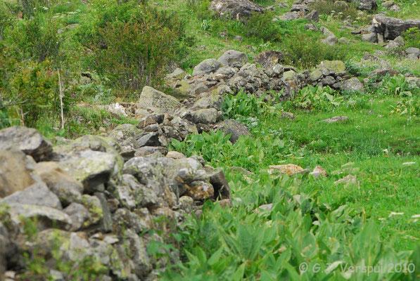 Habitat of Asp Viper and Common Wall Lizard