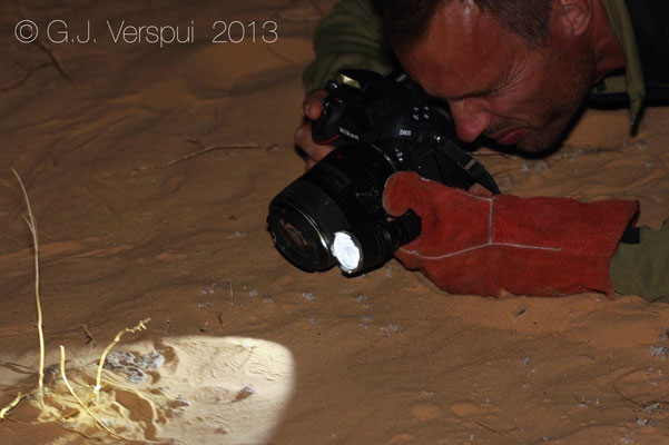Me and a Desert Horned Viper - Cerastes cerastes