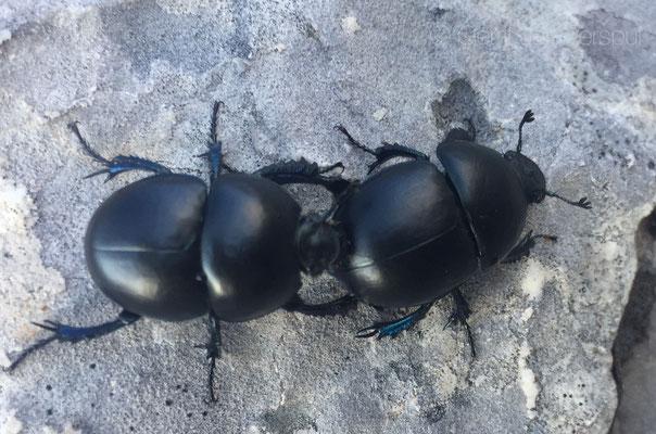 shit bugs