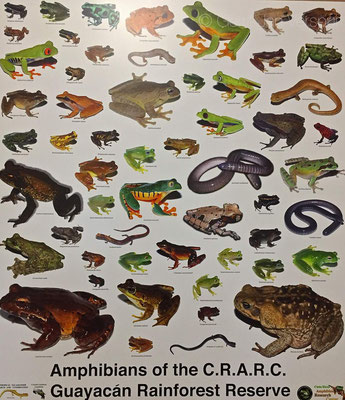 Some more amphibians on here as in 2015