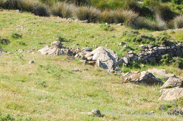 2 Spur-thighed Tortoises - Testudo graeca