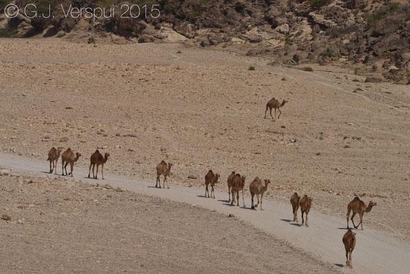 Wadi Ashwq