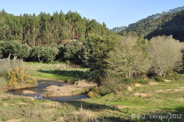 Schreiber's Green Lizard habitat