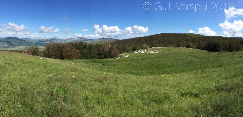 Meadow Viper habitat