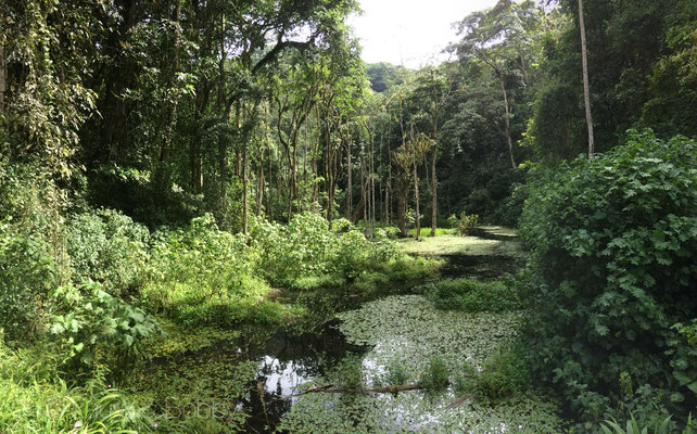 Pond in Bwindi