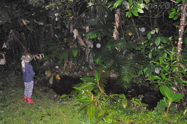 Elin looking for tree frogs around the guesthouse