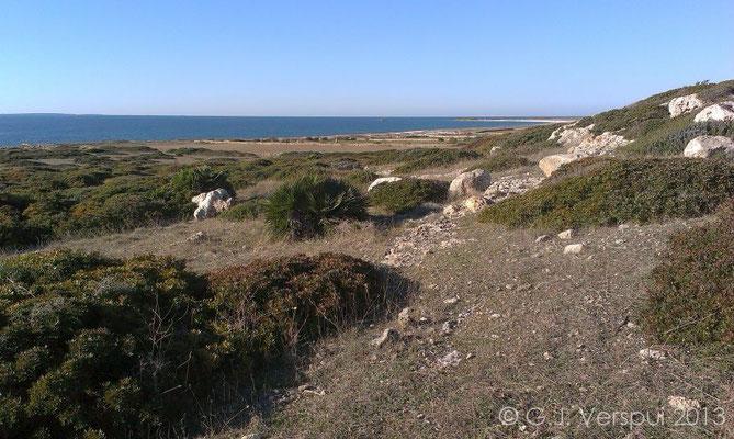 Reptile beach