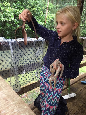 Elin with a Leptodeira septentrionalis, which we found in the jungle cabin