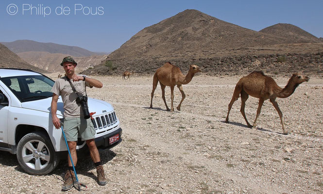 Me, posing with camels and my mega cool snake grabbing tool. © Philip