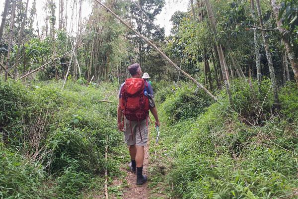 Bamboo zone, © Jelmer