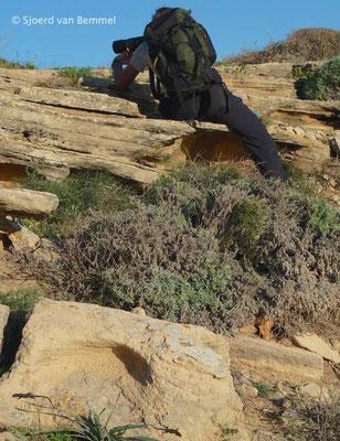 Me photographing Lilford's Wall Lizard - Podarcis lilfordi jordansi