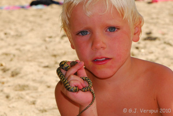 My big friend Jonne with a Viperine Snake