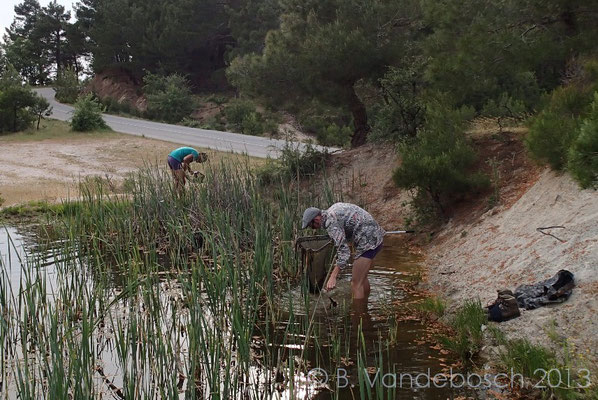Catching newts, or at least one of us is....   © Bert Vandebosch