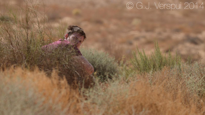 Bears crap in the woods, Sjuul craps in the Negev dunes...