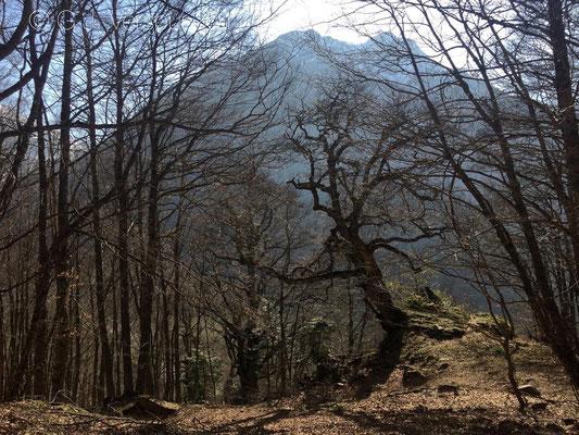 Trees-Pyrenees