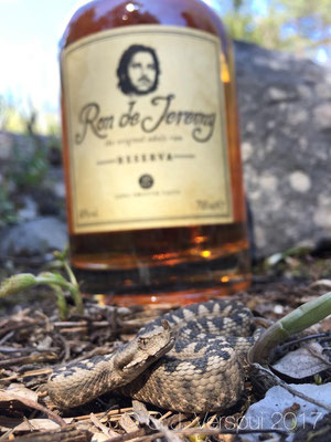 Viper and my gift for Team America, Ron de Jeremy rum.