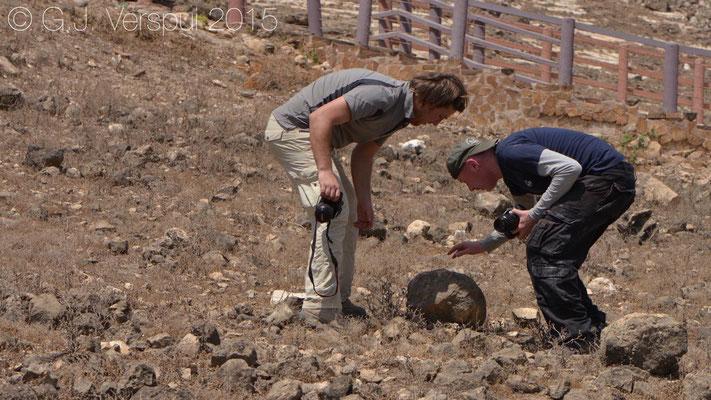 Philip & Jurgen catching a Trachylepis brevicollis