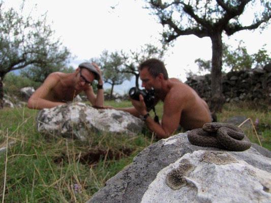 Eastern Montpellier Snake photography, © Jürgen