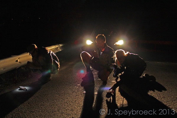 Nerds photographing Toads on the road..  © Jeroen Speybroeck