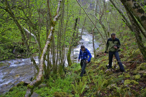 Wouter and me looking for Golden-striped Salamanders © Jeroen Speybroeck