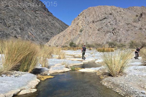 Wadi with Platyceps rhodorachis & Pseudotrapelus jensvendumi