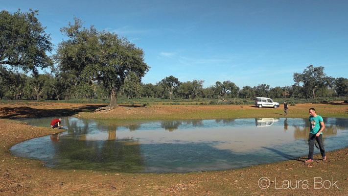 Mauremys leprosa pond. © Laura Bok