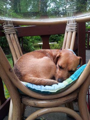Ella findet immer einen besonderen Platz für ein Nickerchen - hier unter unserem Glastisch im Garten