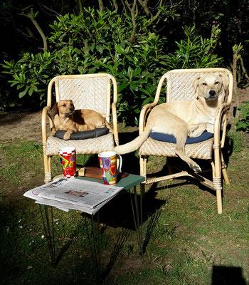 madame et monsieur.... morgens beim Kaffee und Zeitungslesen