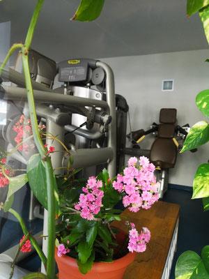 Fitness-Bereich