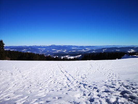 Weitblick bis zu den Alpen