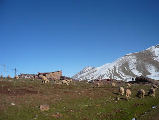 Trekking Alto Atlas. 8 dias / 7 noches. Sahara Salvaje. www.saharasalvaje.com