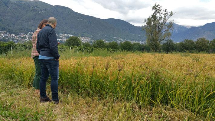 Flavio mit Verkaufsleiterin 'Terreni alla Maggia' vor einem Reisfeld