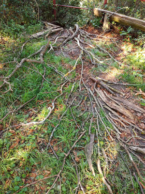 """Rooted"", Yoga-Landart-Retreat, Gut Stolzenhagen, Uckermark, 2018, Ansicht 3"