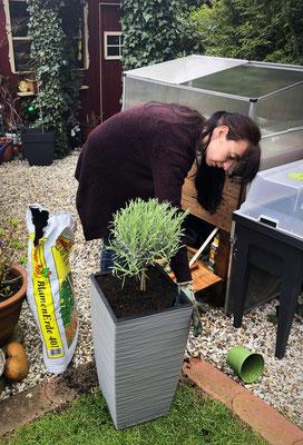 Casa Cozy Bepflanzung Lavendel