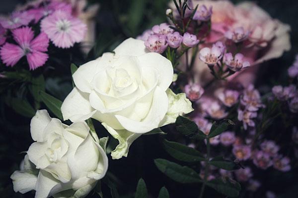 Detailansicht Floraprima Rosen