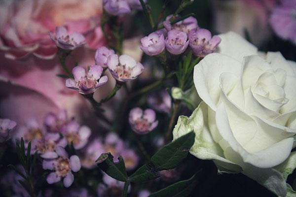 Detailansicht Floraprima