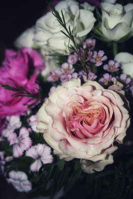 Detailansicht Rosen Floraprima