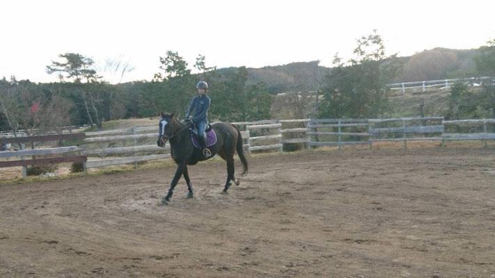 写真は乗馬のイメージです。実際には長いリードで円運動をします。