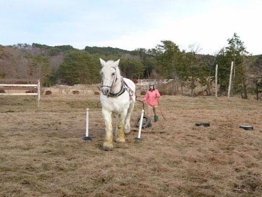 馬搬の基礎練習の様子