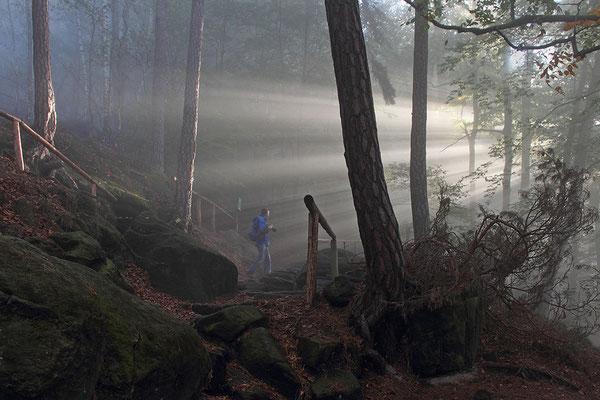 Kurzer Nebelzauber am Lilienstein