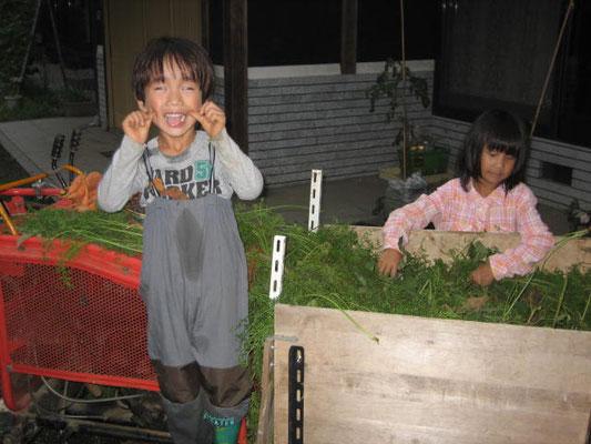 運搬機で人参を運ぶ子供たちの写真