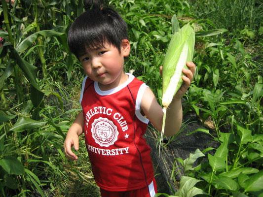 とうもろこしを収穫したお兄ちゃんの写真