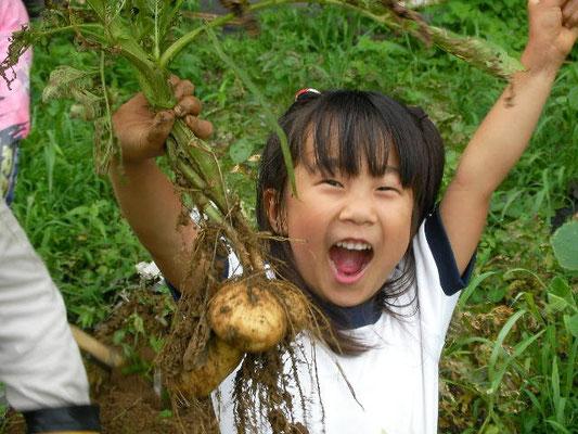 じゃfがいもを収穫した娘の写真