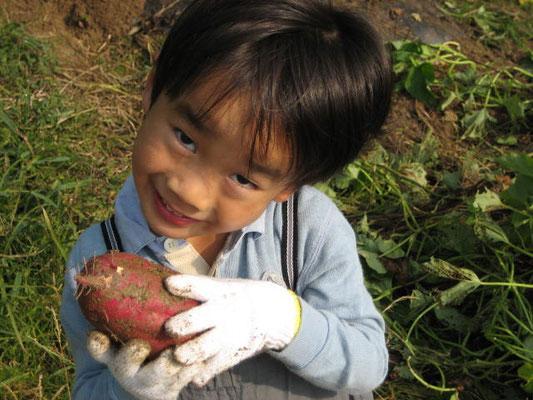 さつまいもを収穫した息子の写真