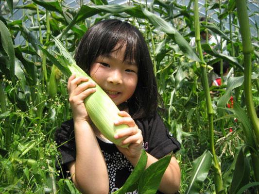 とうもろこしを収穫した女の子の写真