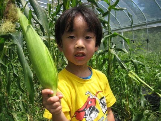 とうもろこしを収穫した息子の写真