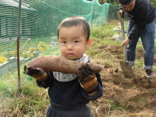 サツマイモを収穫した男の子の写真